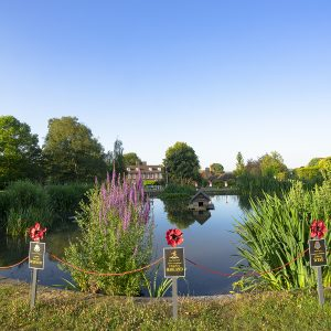 Photo of Otford Pond, early summer morning, by Jane Mucklow