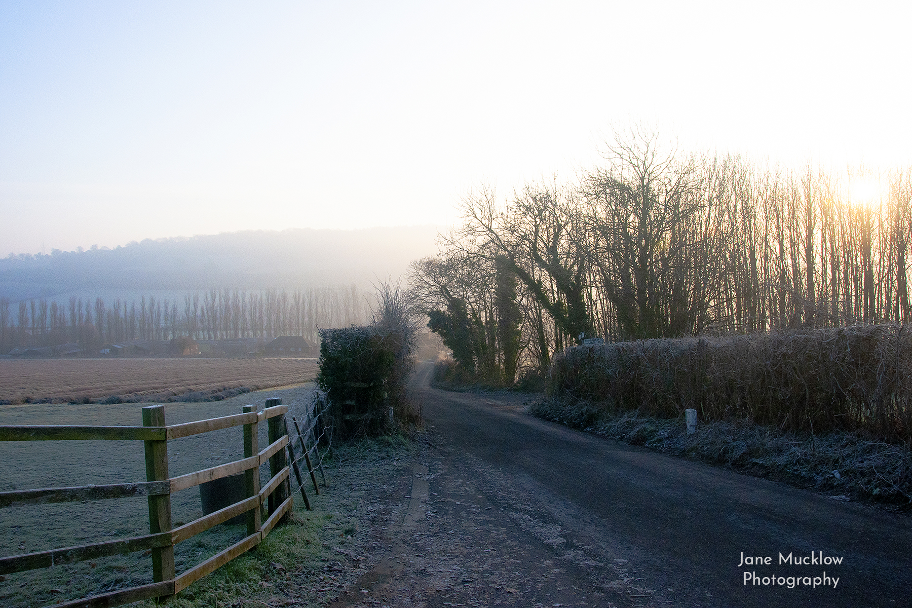 Photo of a frosty sunrise at the lavender farm, by Jane Mucklow