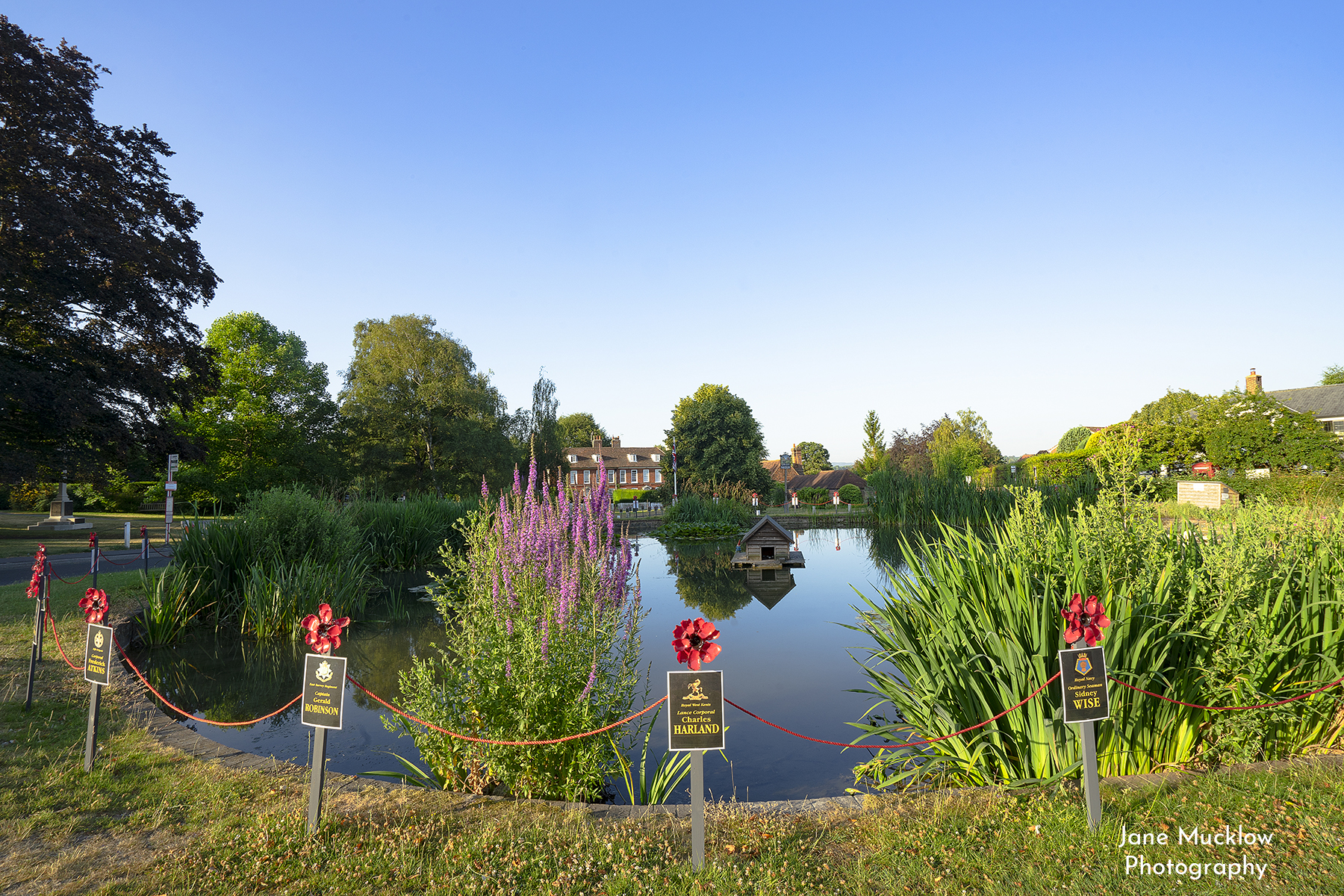 Photo of the Otford Pond on an early summer morning, by Jane Mucklow