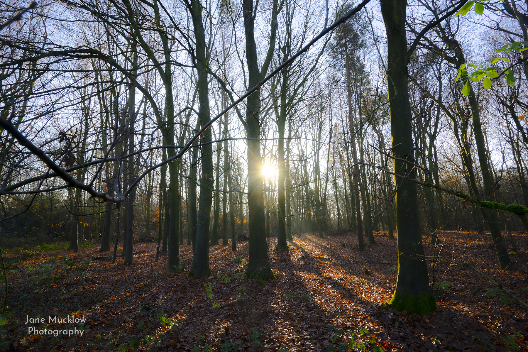 Photo by Jane Mucklow of the sun shining through woods near Ide Hill, Kent