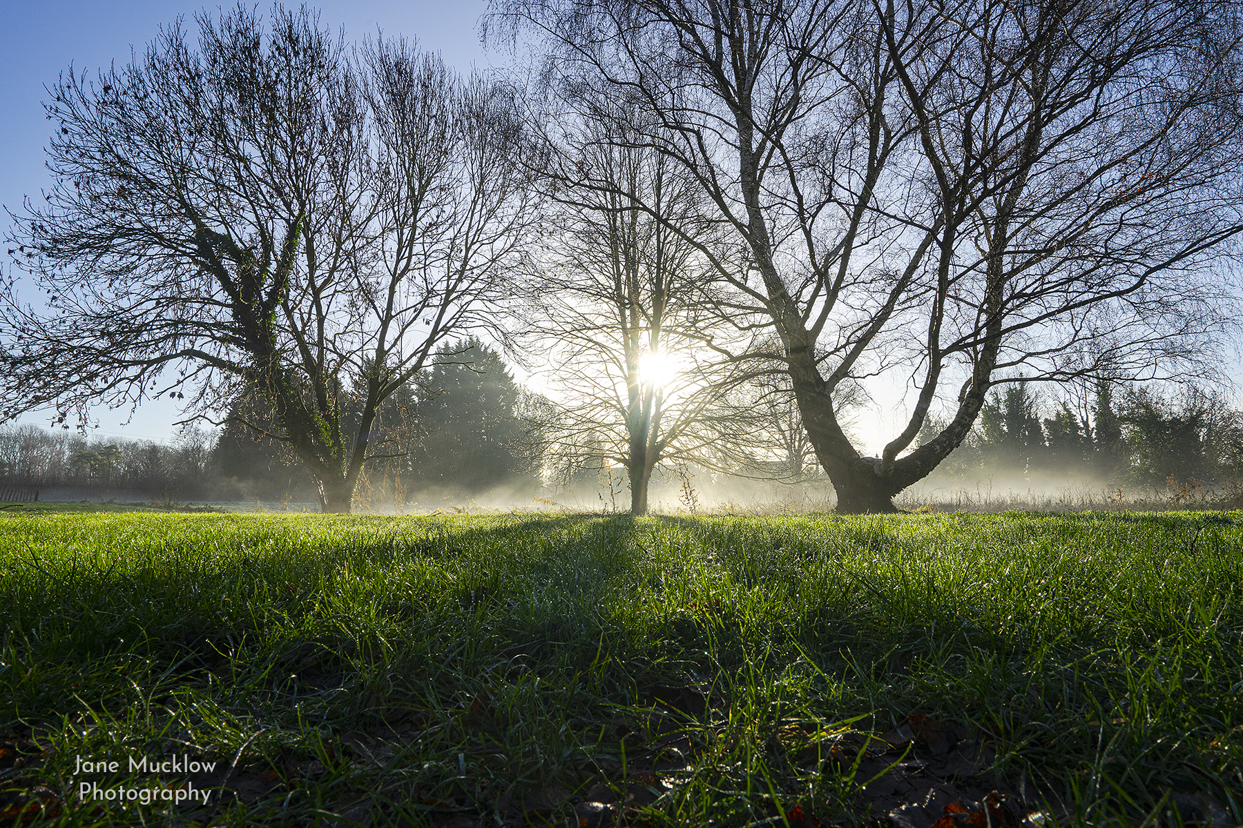 Photo by Jane Mucklow of a misty, frosty winter morning, view across the palace field, Otford, Kent