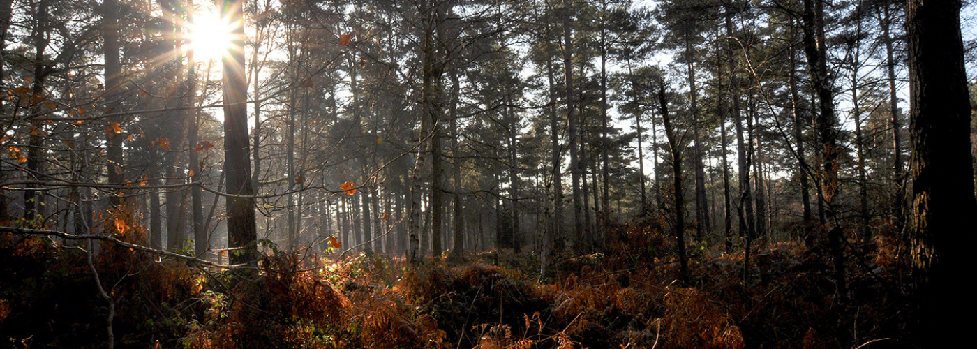 Photo by Jane Mucklow of Autumn woods, Kent