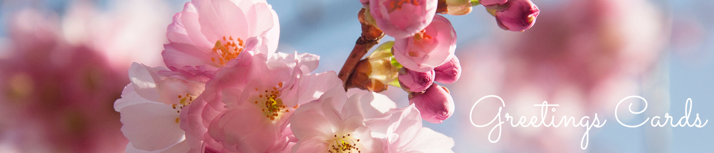 Photo by Jane Mucklow Photography of pink cherry blossom on a blue sky