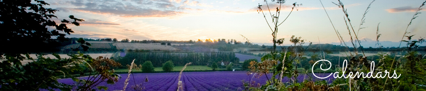 Photo by Jane Mucklow Photography of a sunset over a lavender field, Kent