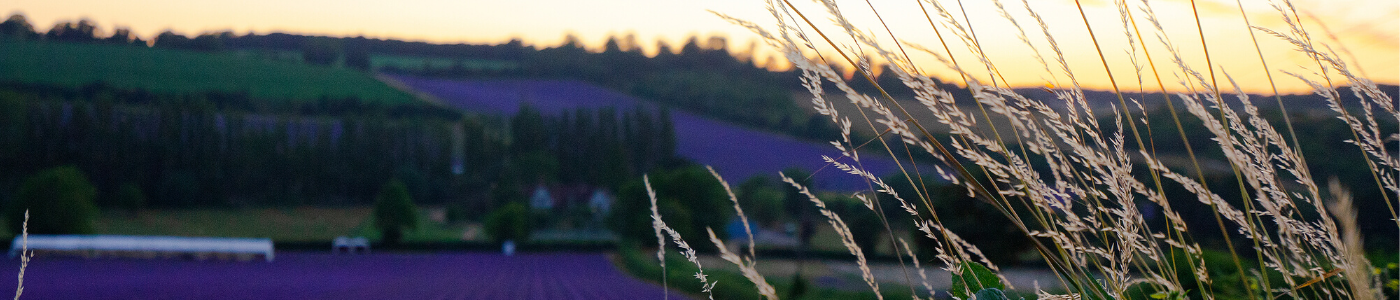 Photo of a sunset over the lavender farm in Shoreham, Kent, by Jane Mucklow