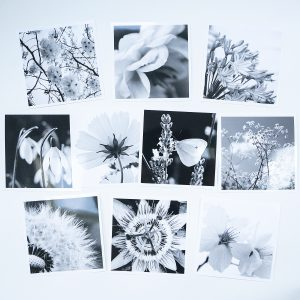Photograph by Jane Mucklow of ten greetings cards of black and white flower photographs by Jane Mucklow.