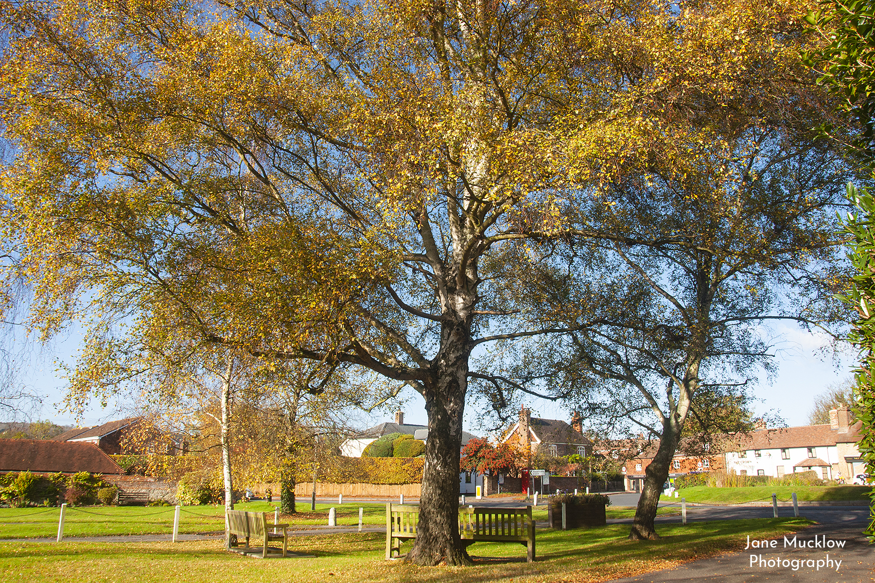Photograph of the Autumn trees on the village green