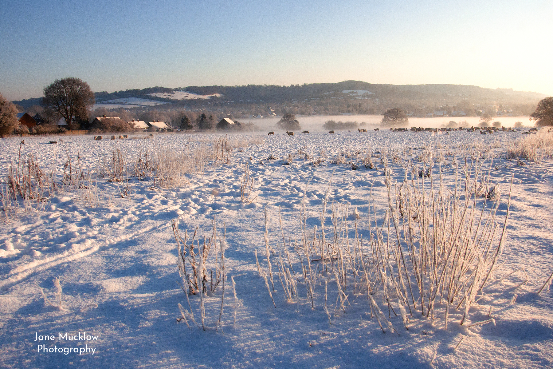 Photograph by Jane Mucklow of a snowy view across the sheep field to Otford, at sunrise
