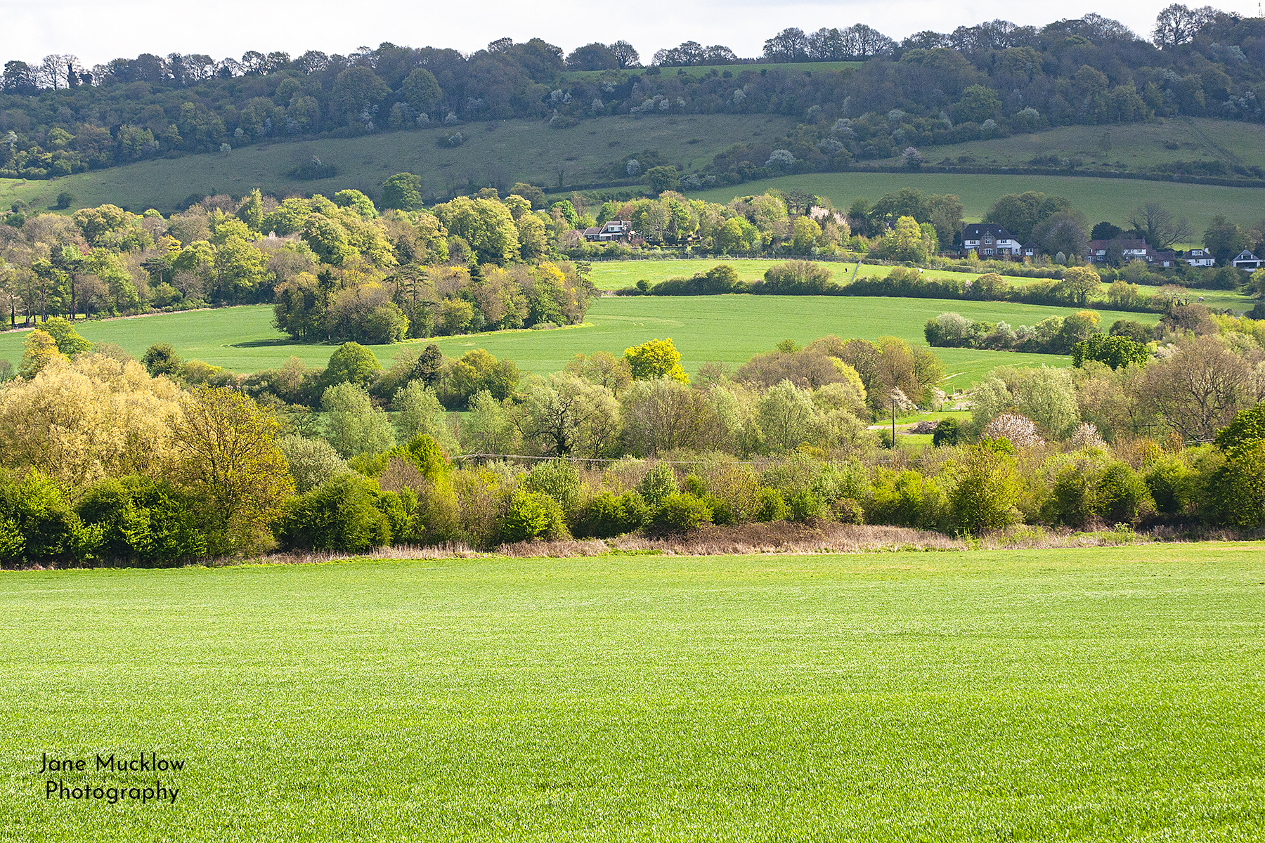 Photograph by Jane Mucklow of a Spring view across the fields to the Mount