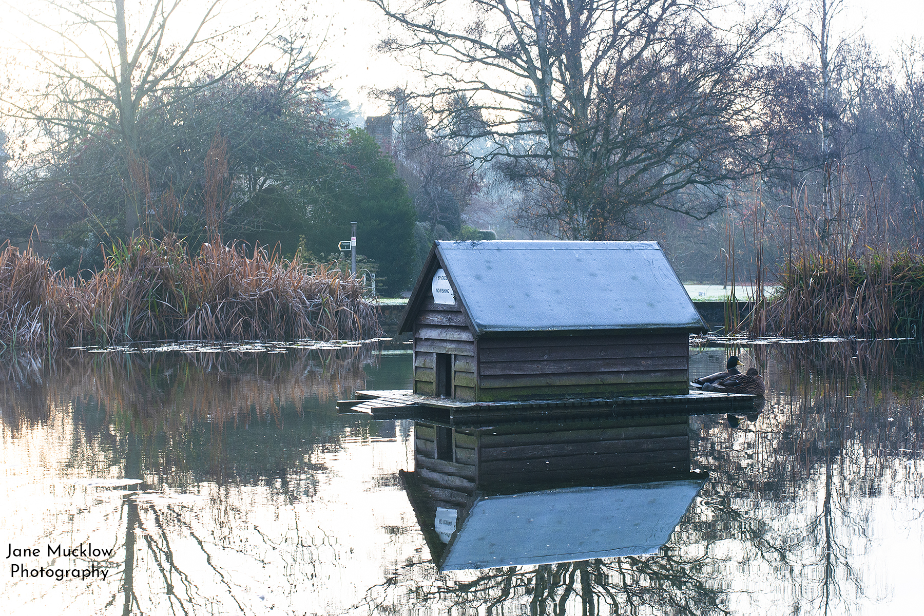 Photograph by Jane Mucklow of the duck pond and a frosty duckhouse