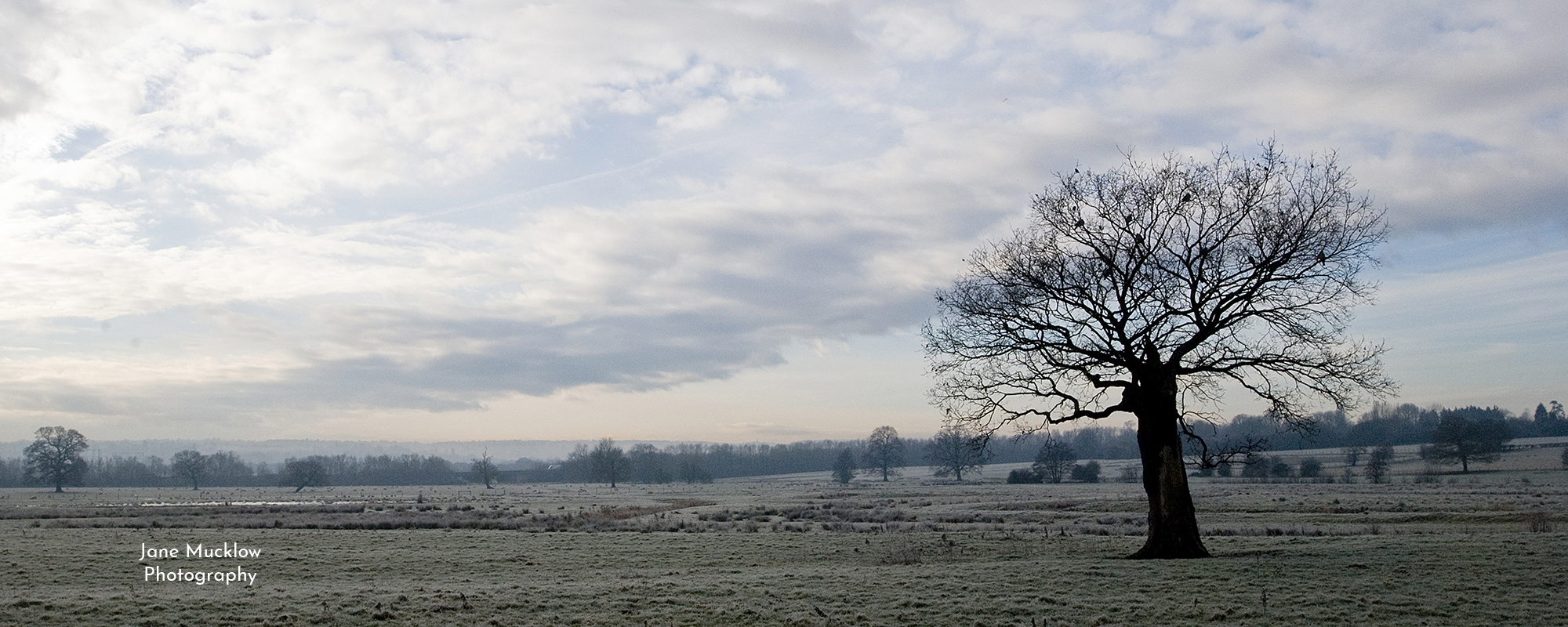 Photo by Jane Mucklow of the Lone Tree and a frosty misty sunrise, view from Otford to Sevenoaks, Kent, available as a canvas for your wall.