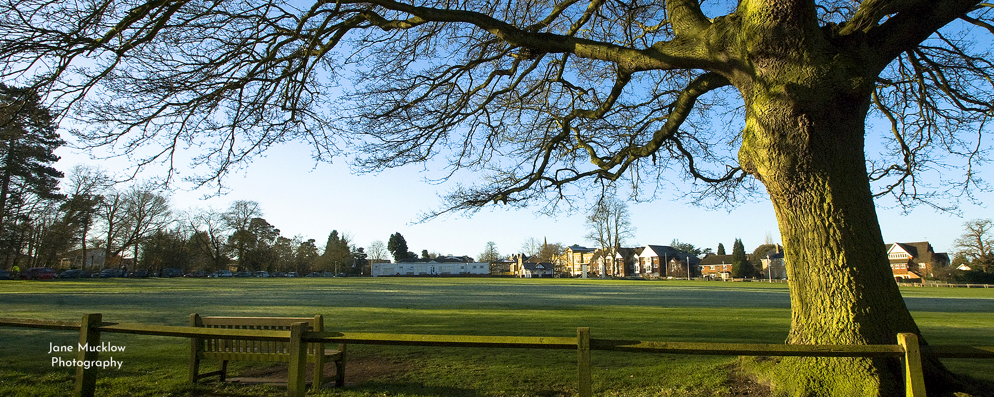 Photo by Jane Mucklow of Sevenoaks Vine cricket ground on a frosty morning, with the old oak tree, Sevenoaks, Kent, available as a canvas for your wall.