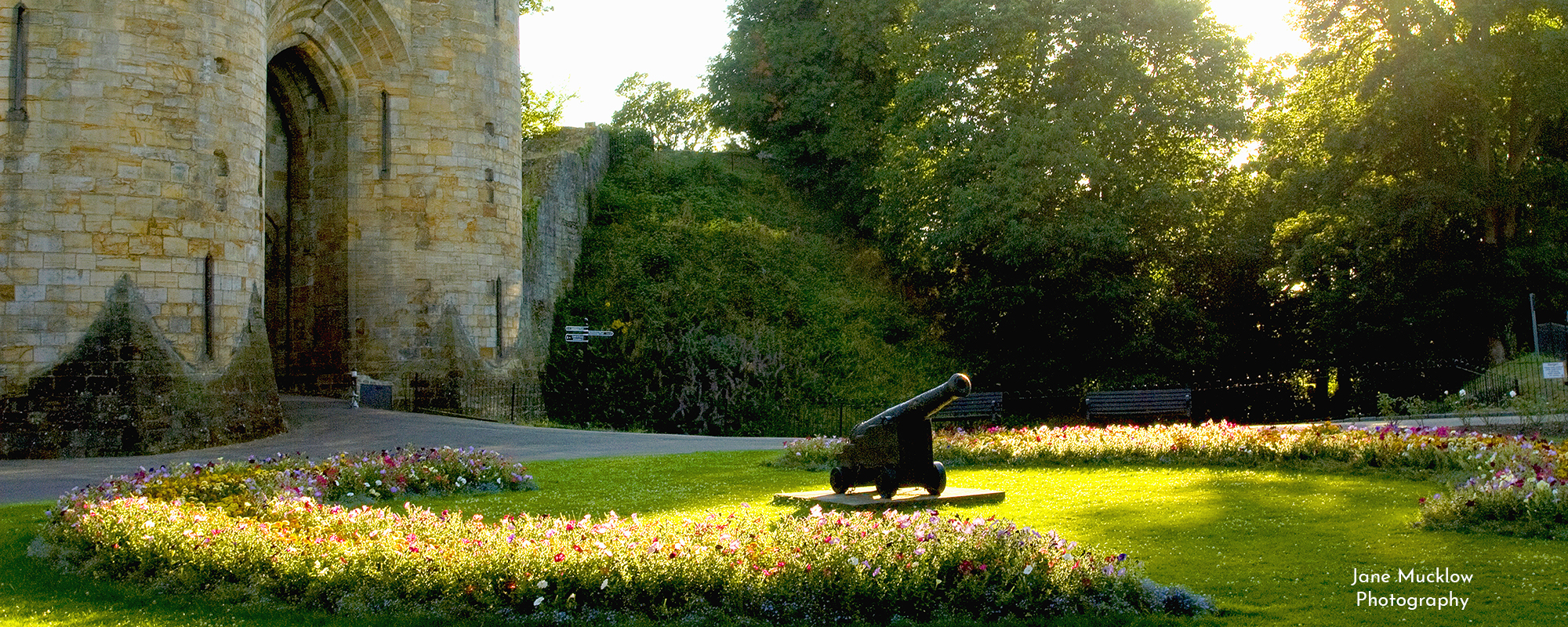 Photo by Jane Mucklow of the cannon and flowers at Tonbridge Castle, Kent, available as a canvas for your wall.