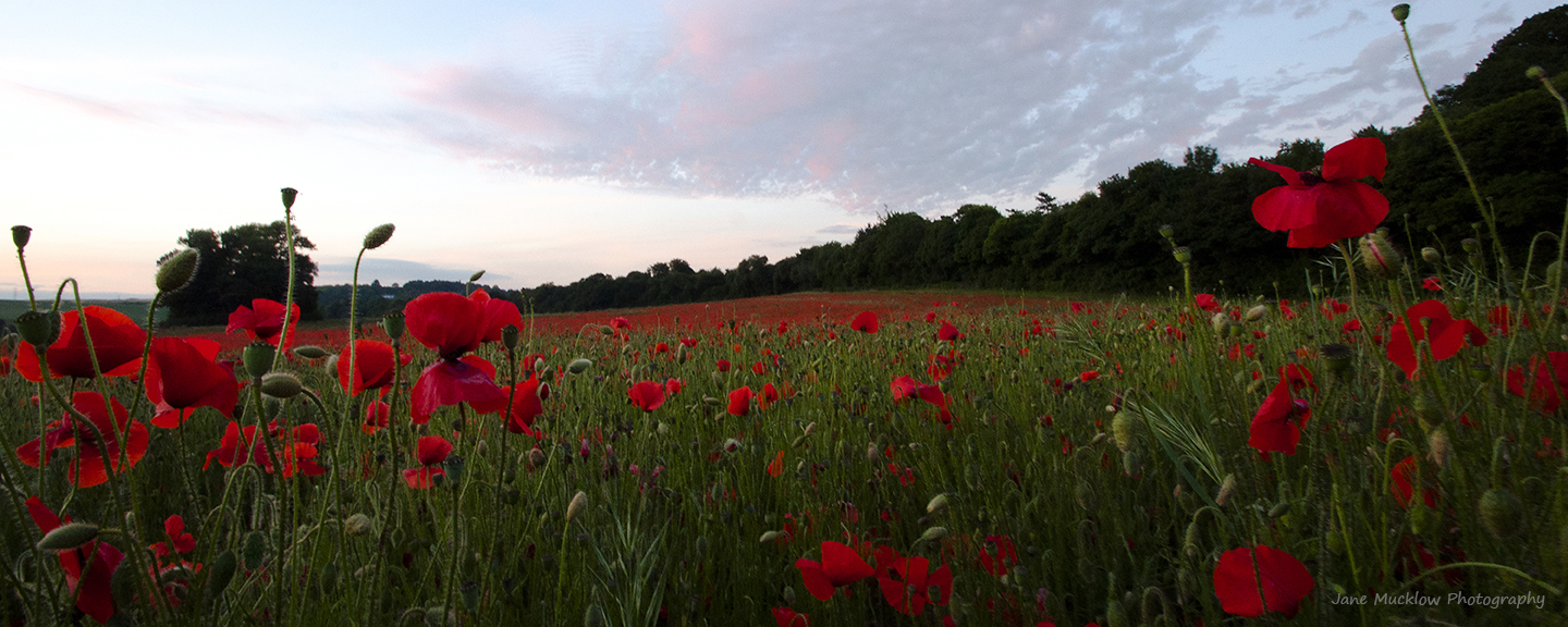 Photo by Jane Mucklow of a poppy field and after sunset sky
