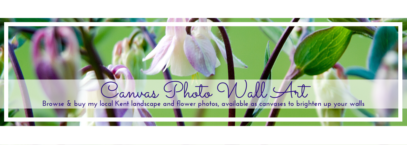 Photo by Jane Mucklow of pinky-white aquilegia, Canvas photo wall art page button.