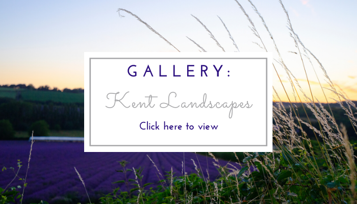 Photo by Jane Mucklow of a sunset over a lavender field, website page button for the Kent Landscapes photo gallery