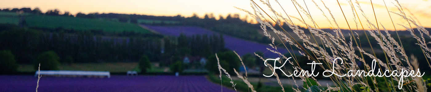 Photo by Jane Mucklow of a sunset over lavender fields, Kent Landscapes photos gallery header image
