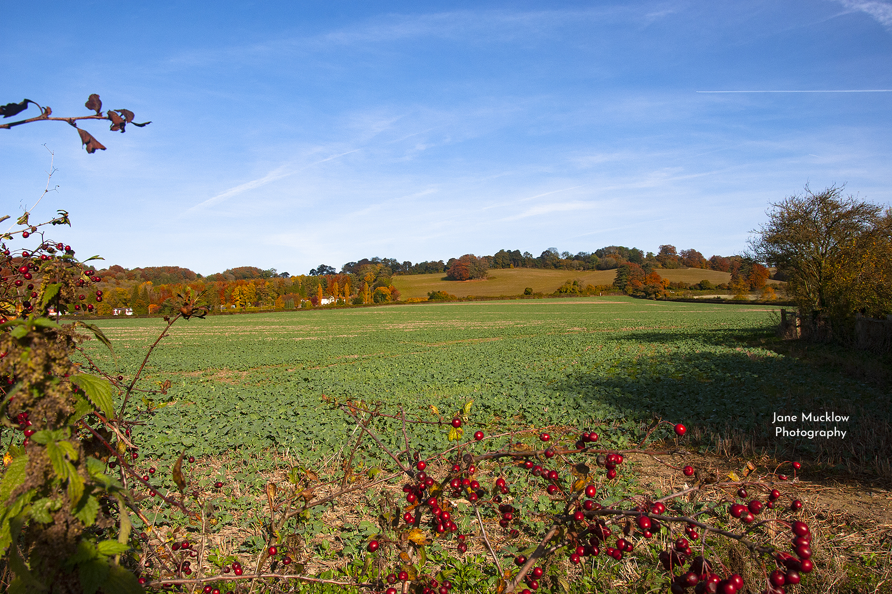 Photo by Jane Mucklow of Autumn fields near Kemsing, Kent.