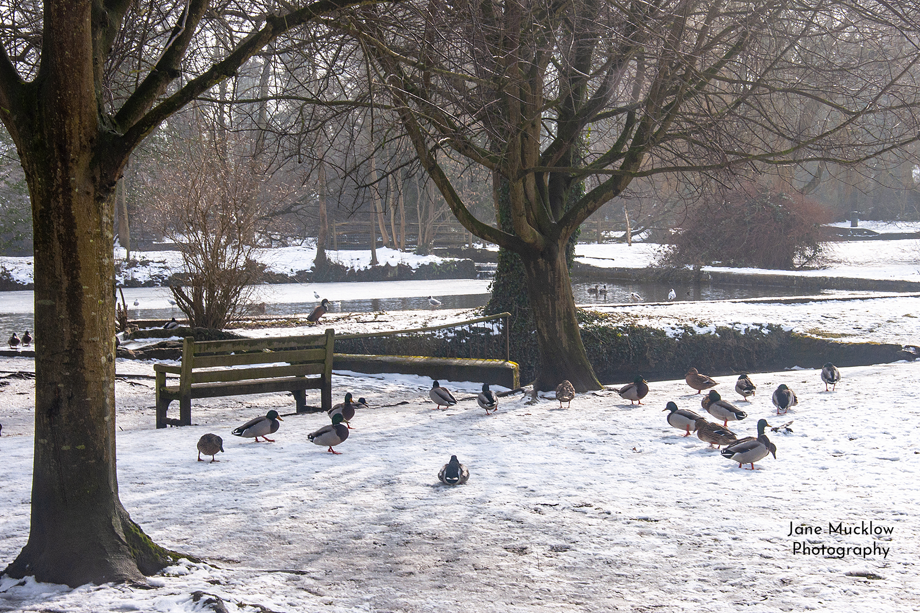 Photo by Jane Mucklow of Bradbourne Lakes in the snow, Sevenoaks, Kent.