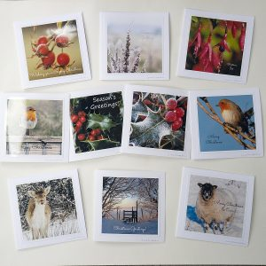 Pack of Christmas cards, all of photographs by Jane Mucklow, on a nature theme, holly, robins, flowers