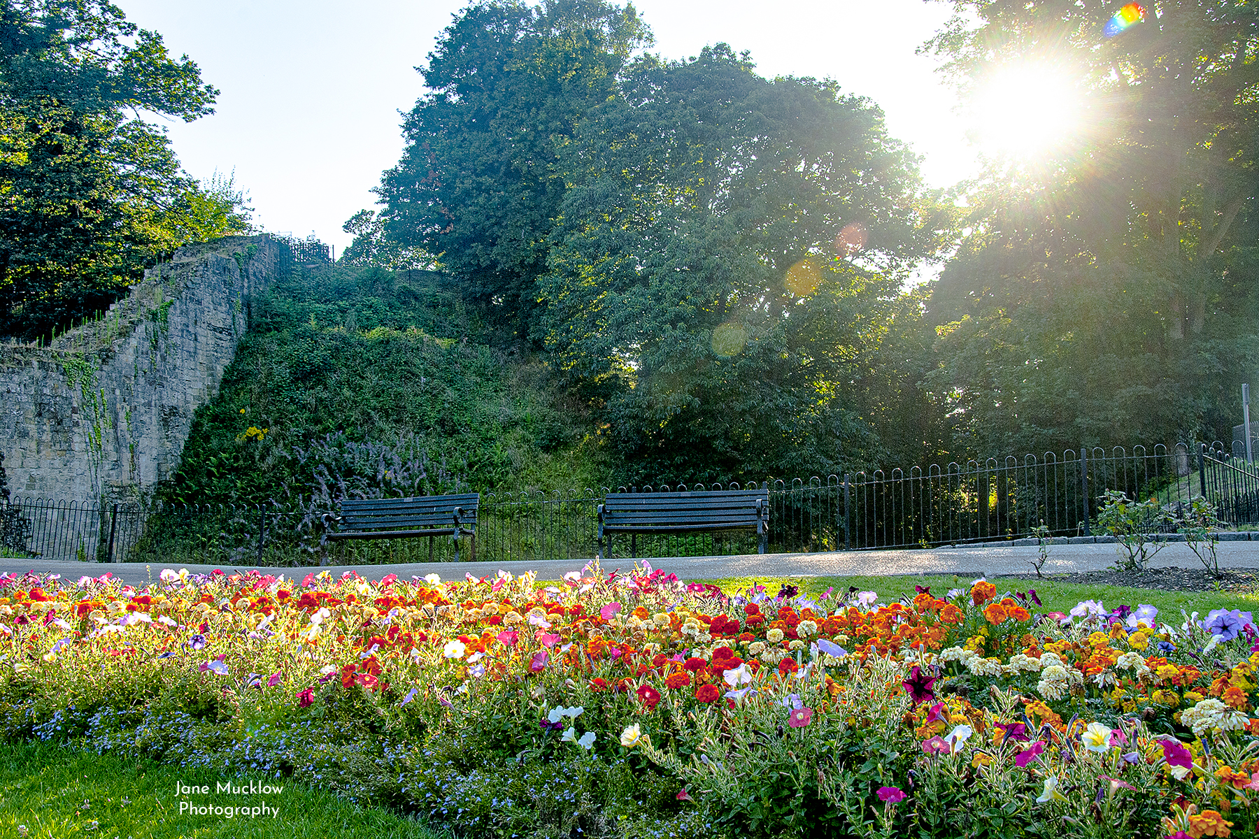 Photo by Jane Mucklow of flowers on Cannon Lawn of Tonbridge Castle in the summer afternoon sunshine