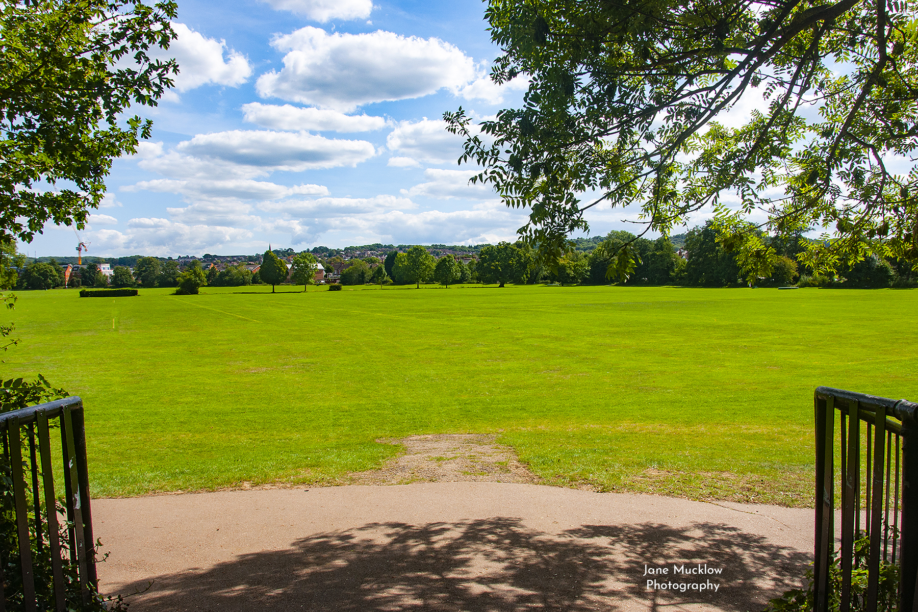 Photo by Jane Mucklow of an early summer view across Tonbridge Park