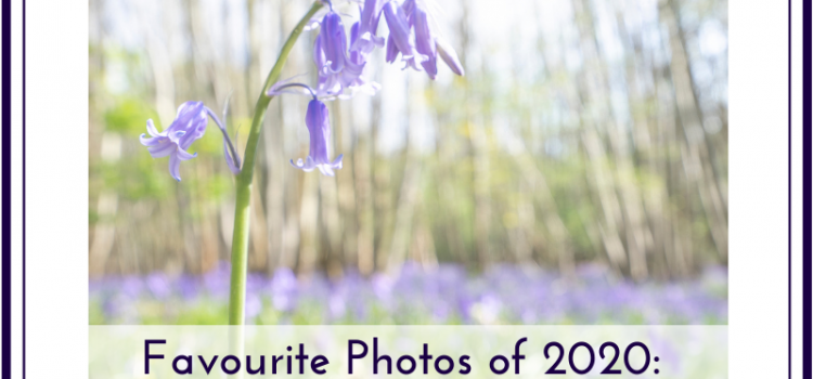 Blog post title image, with photo of bluebells by Jane Mucklow for blog of favourite photos of 2020
