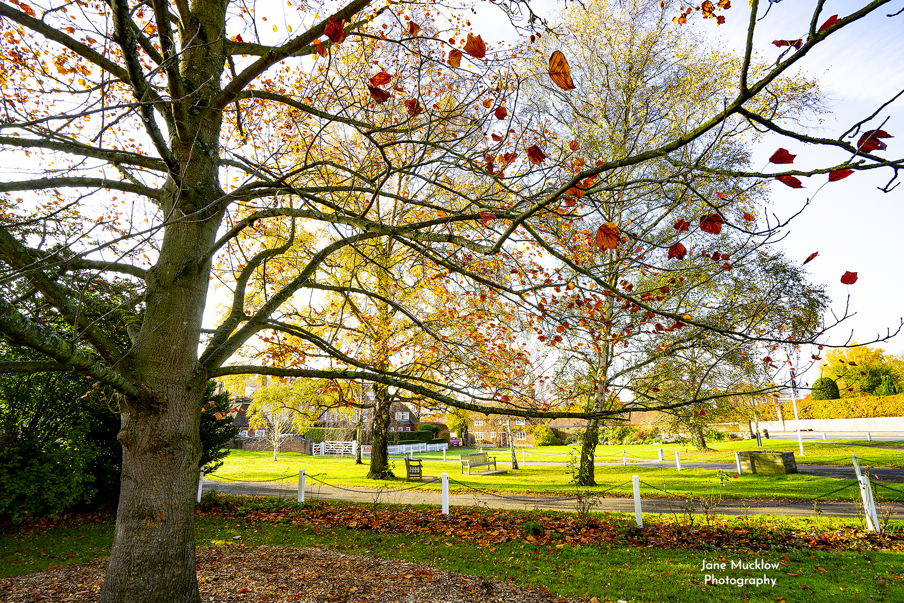 Photo of Autumn leaves on the village green Otford Kent by Jane Mucklow