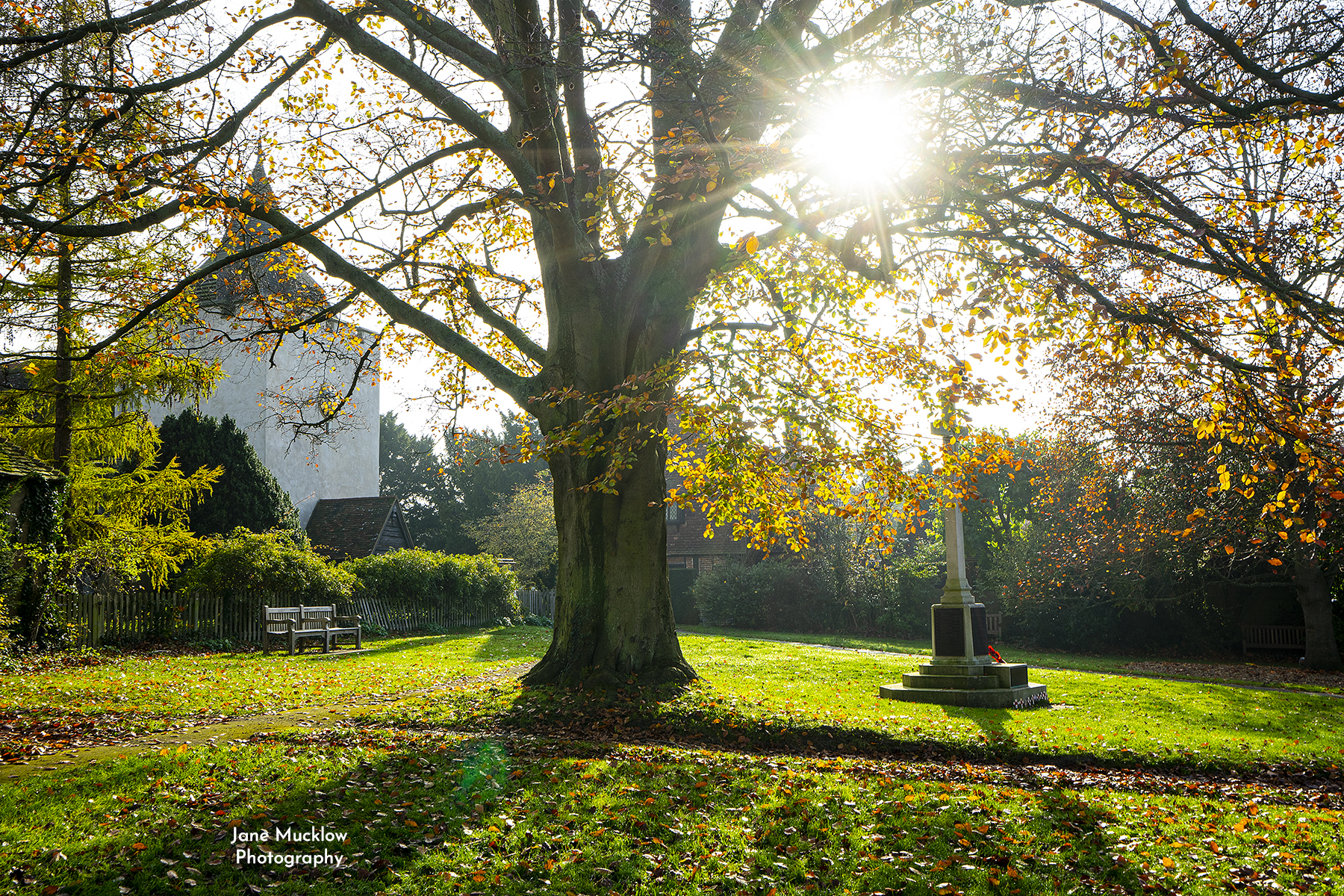 Photo of sunshine through the tree at the war memorial Otford Kent by Jane Mucklow