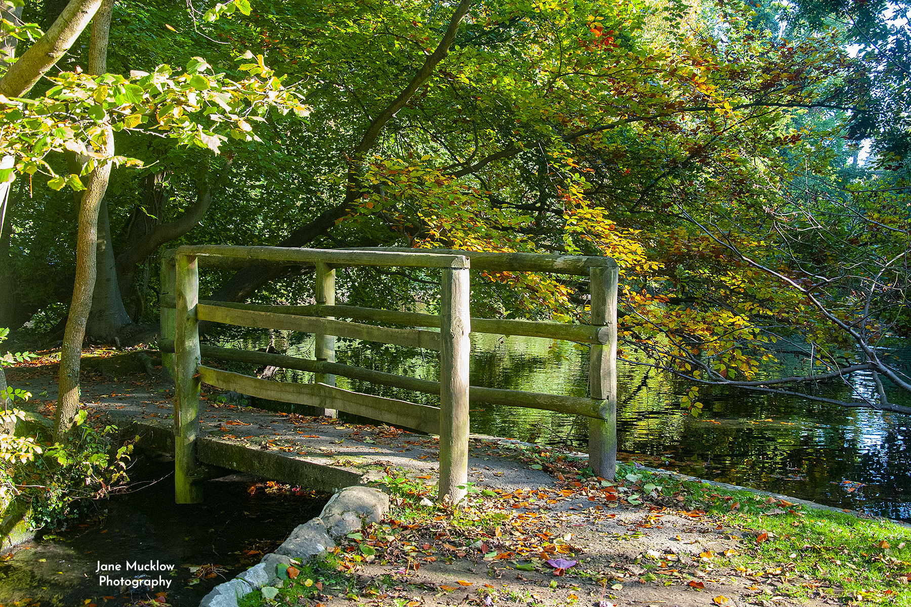 Photo of a bridge and Autumn leaves, at Bradbourne Lakes, Sevenoaks, by Jane Mucklow