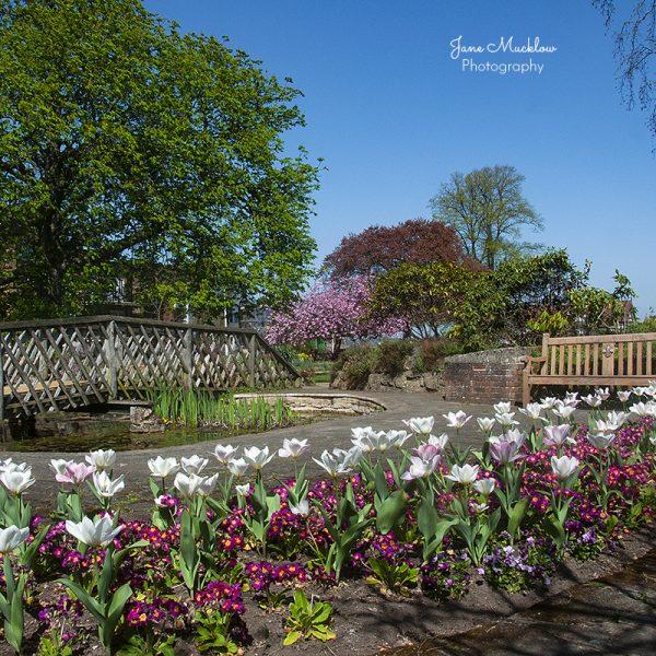 Photo of the Vine Gardens in Sevenoaks, in Spring, by Jane Mucklow