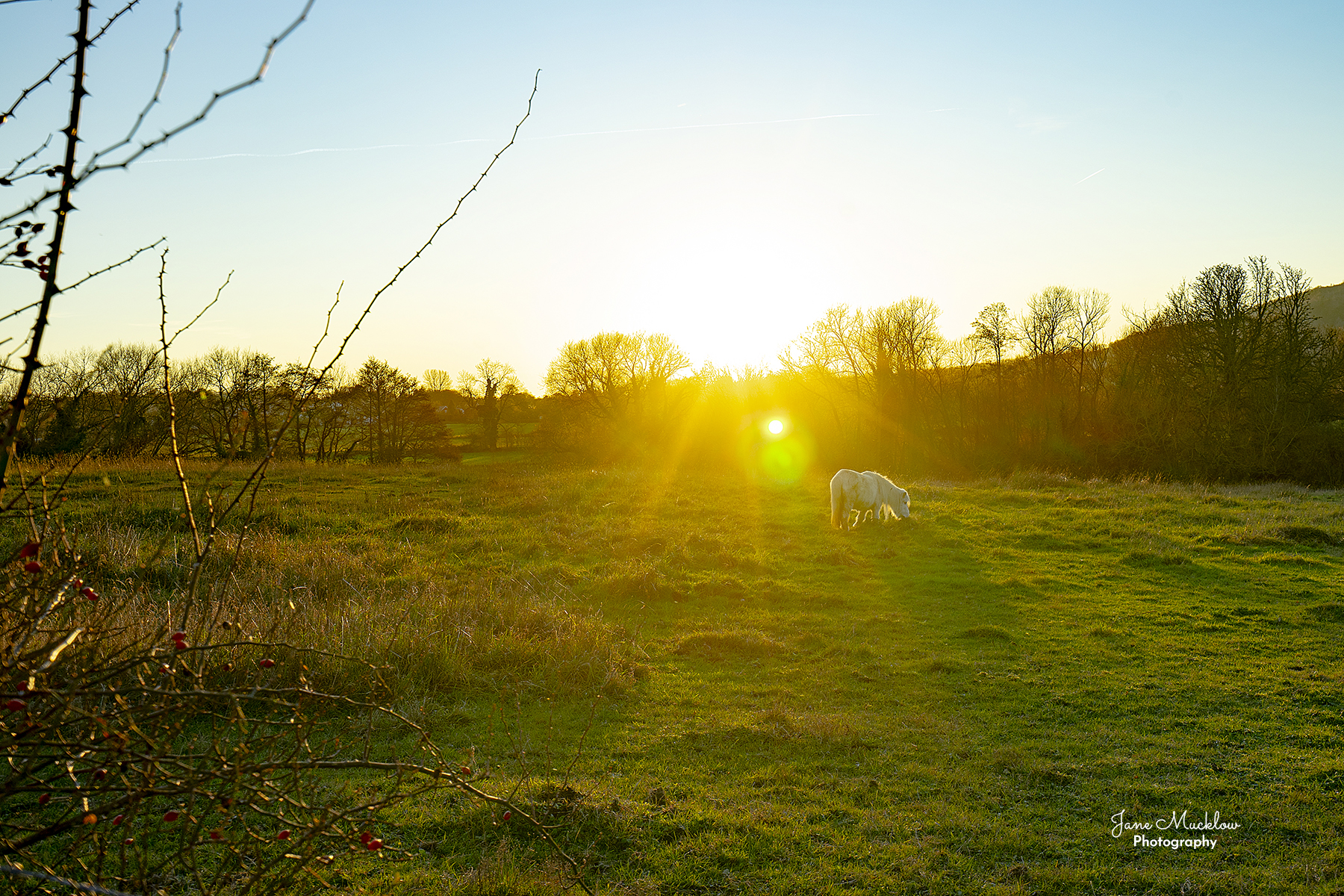 Photo of the sunset across the pony field near Otford, by Jane Mucklow