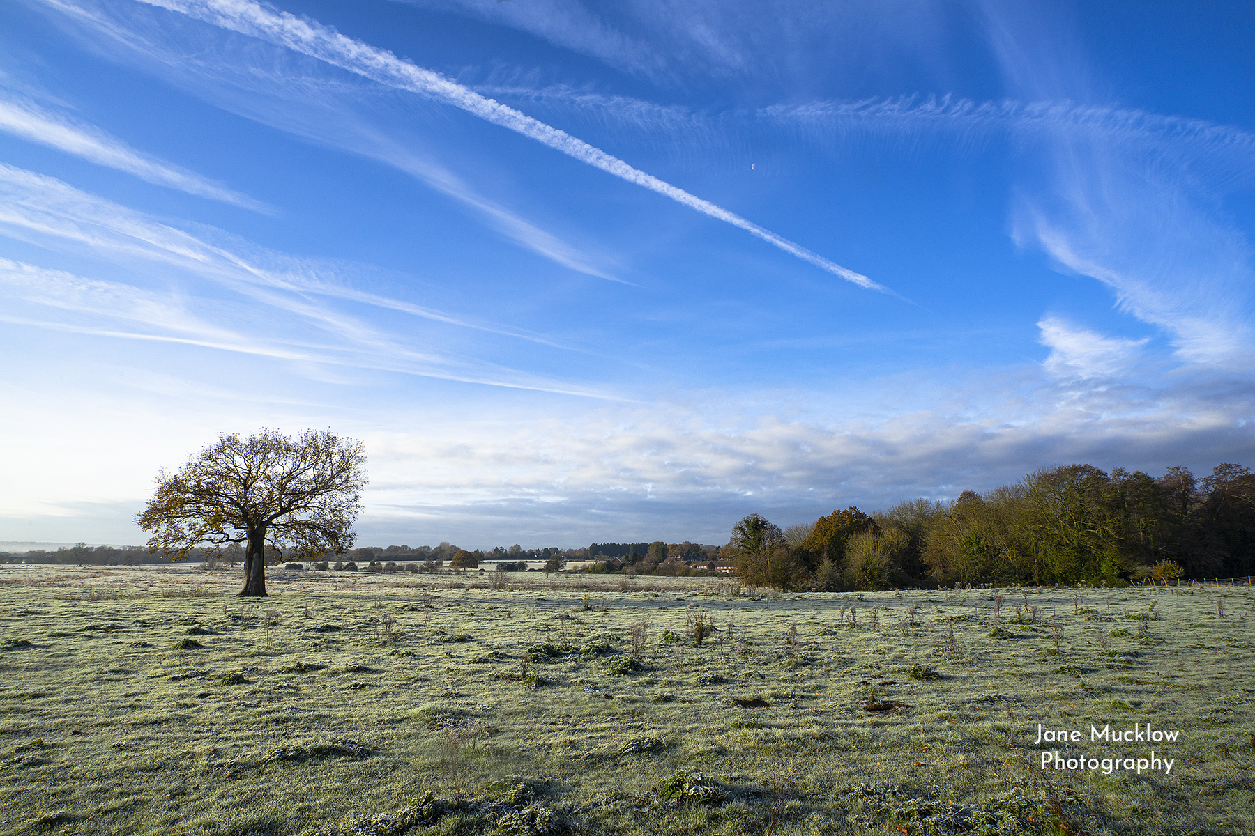 Photo of the Lone Tree, Otford, frosty winter morning, by Jane Mucklow