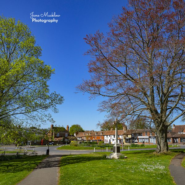 Photo of Otford pond in Spring, by Jane Mucklow