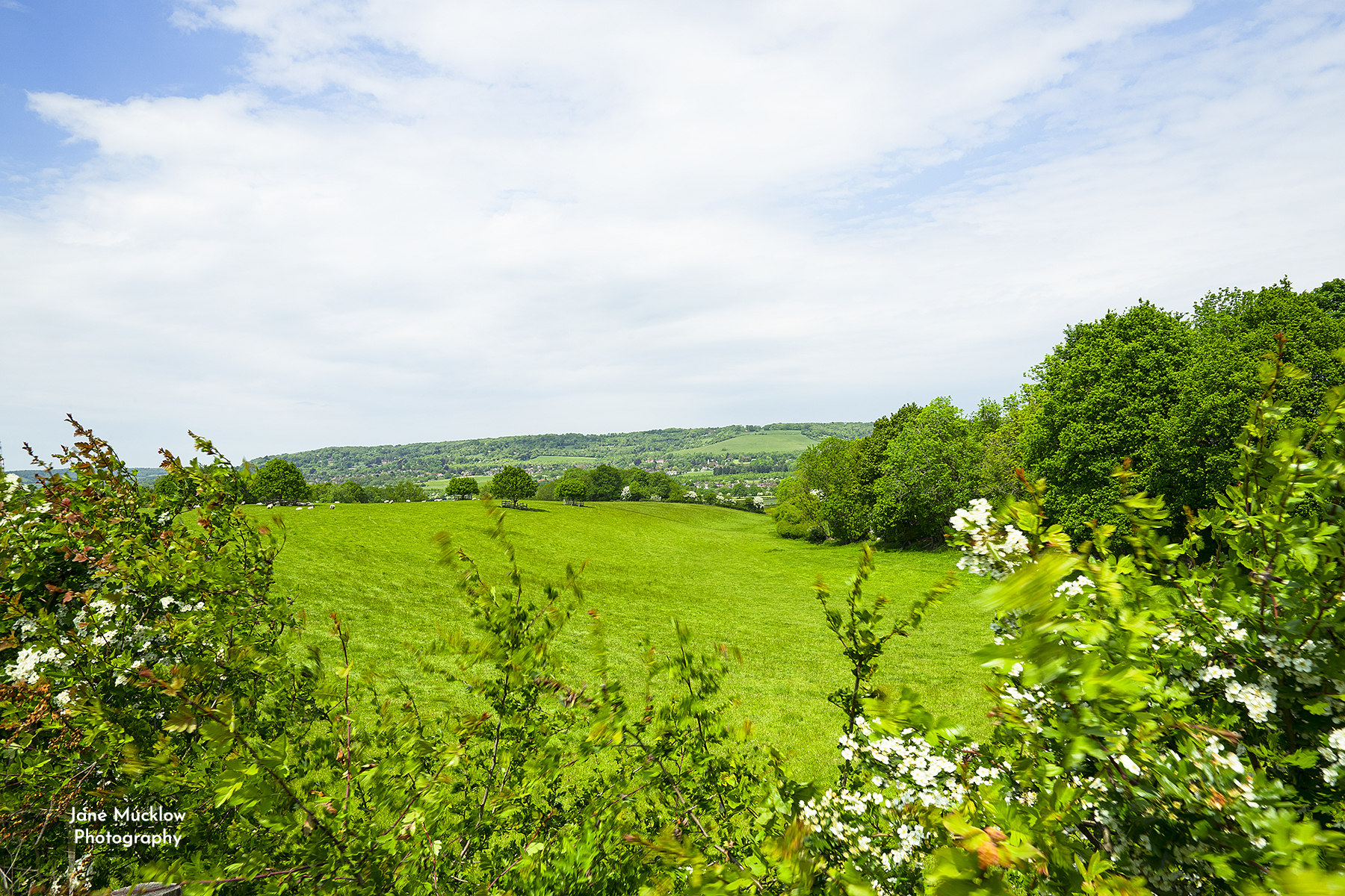Photo of the view towards Kemsing from Seal Chart, with may blossom, by Jane Mucklow