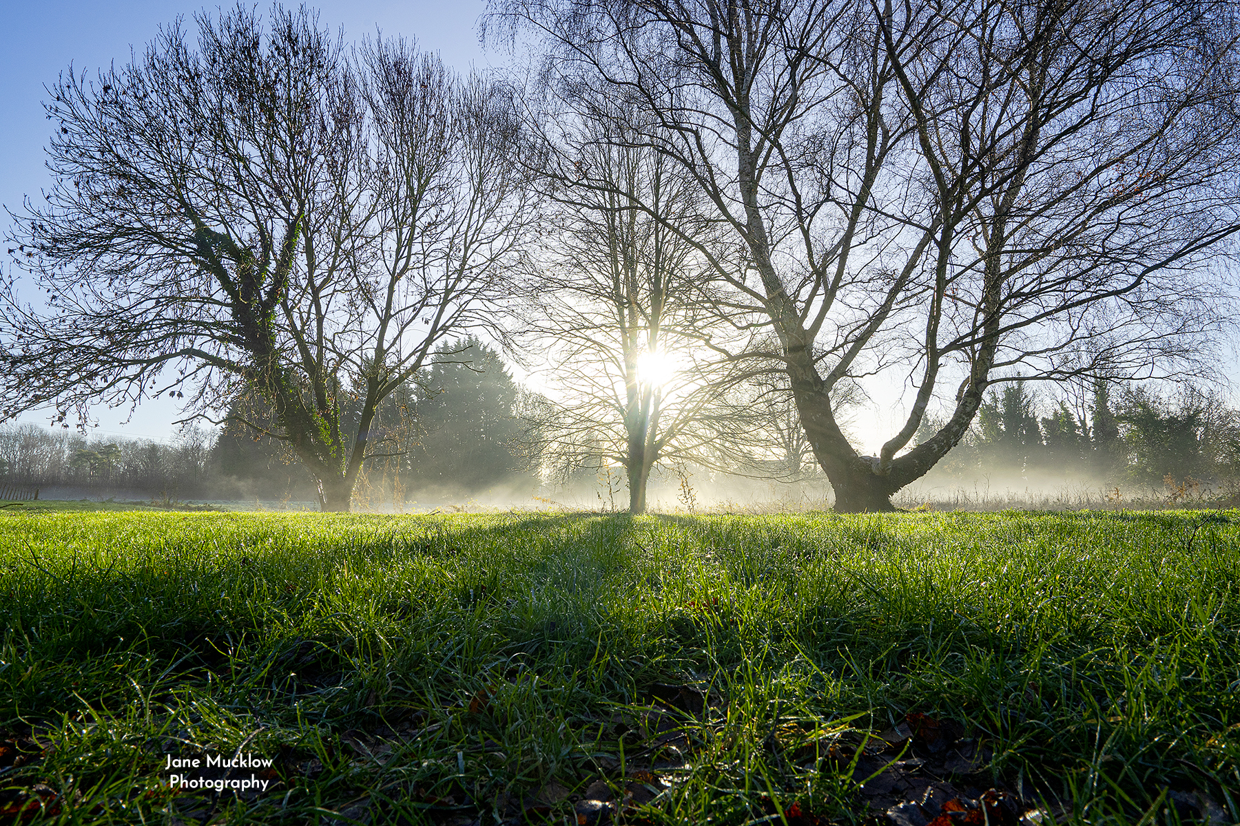 Photo of sunrise through the trees in the Palace field, Otford, misty morning, by Jane Mucklow