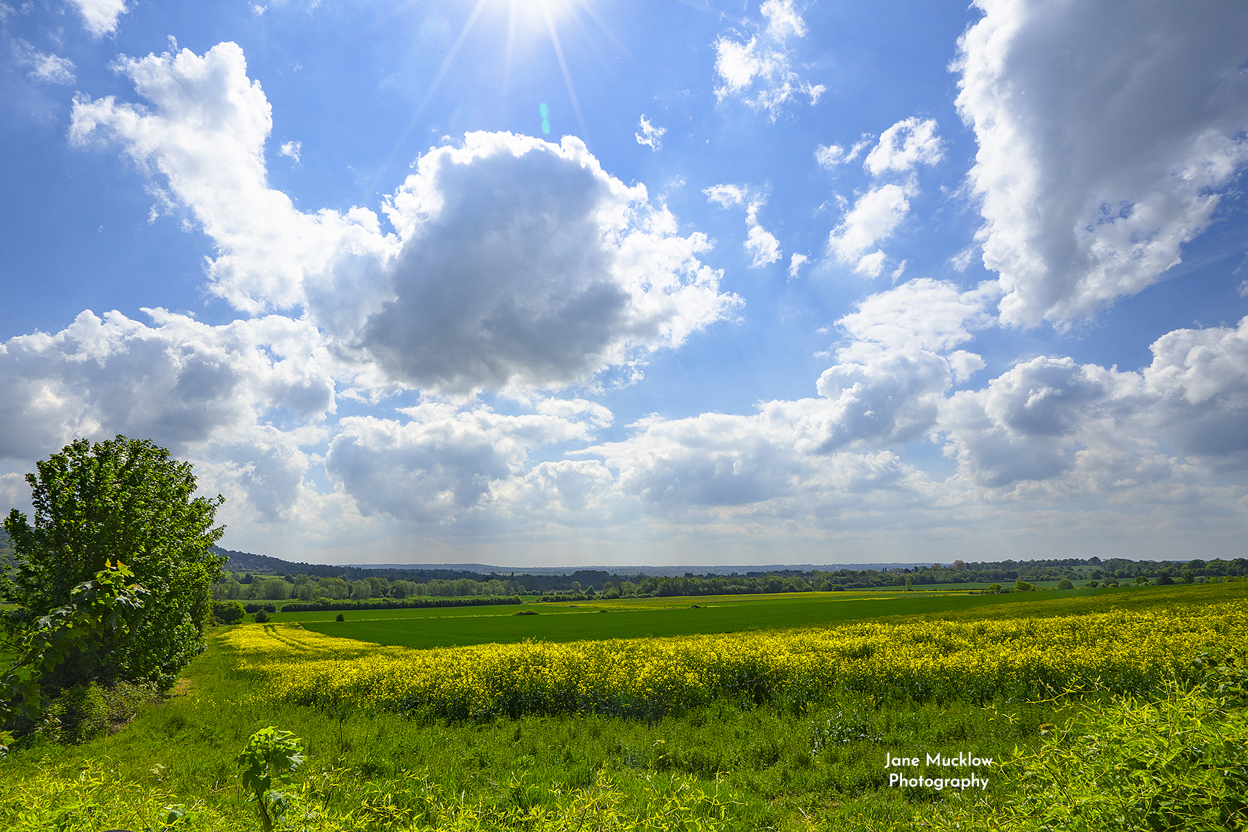 Photo of Spring view across the rape field towards Otford and Sevenoaks, by Jane Mucklow