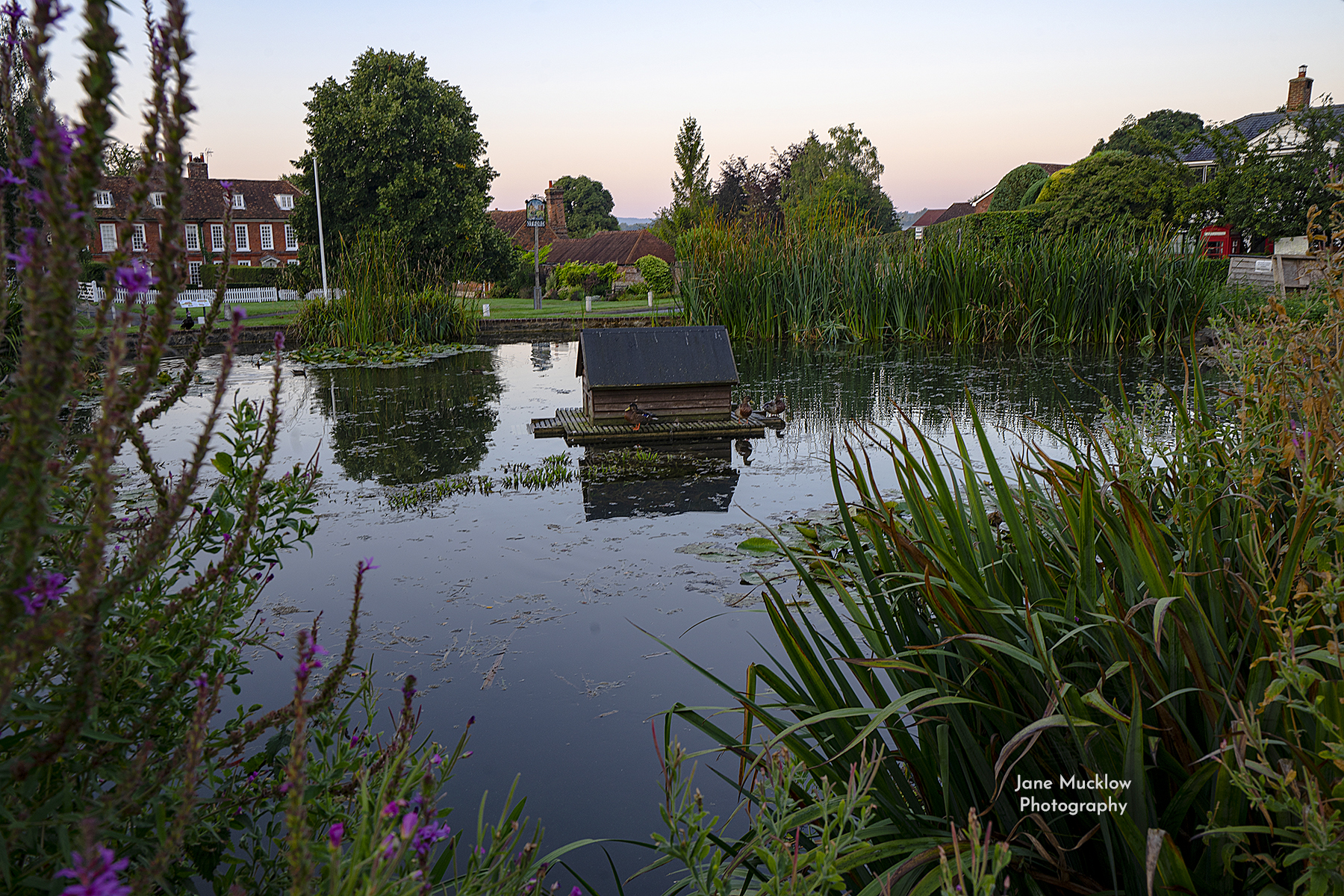 Photo of Otford pond at sunrise, by Jane Mucklow