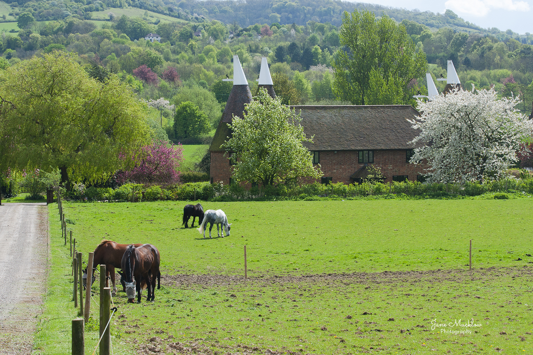 Photo of Filston Oasts and Spring blossom, by Jane Mucklow