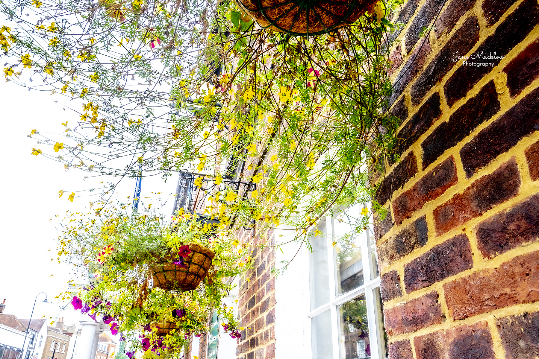 Photo of flower baskets at the Rose & Crown hotel, Tonbridge High Street, by Jane Mucklow
