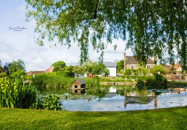 Photo of Otford Pond with summer morning reflections, by Jane Mucklow Photography