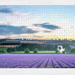 Jigsaw puzzle image of photo of the lavender farm at sunset by Jane Mucklow Photography