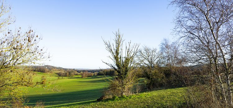 Photo of an Autumnal view, looking north across the park, by Jane Mucklow